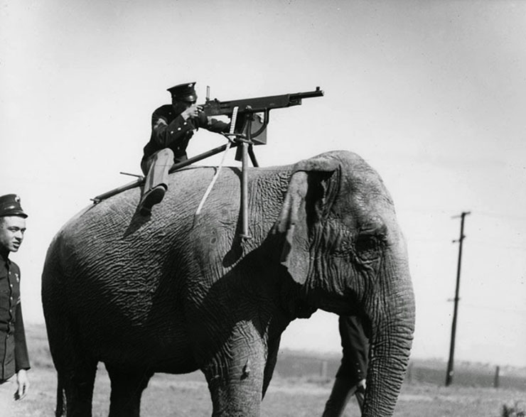 elefante da guerra